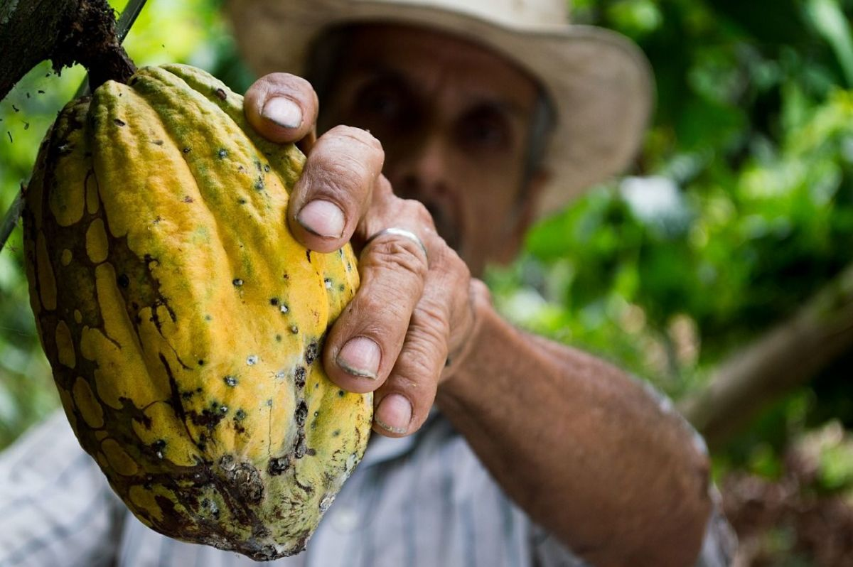 Le cacao, un destockeur naturel de graisse